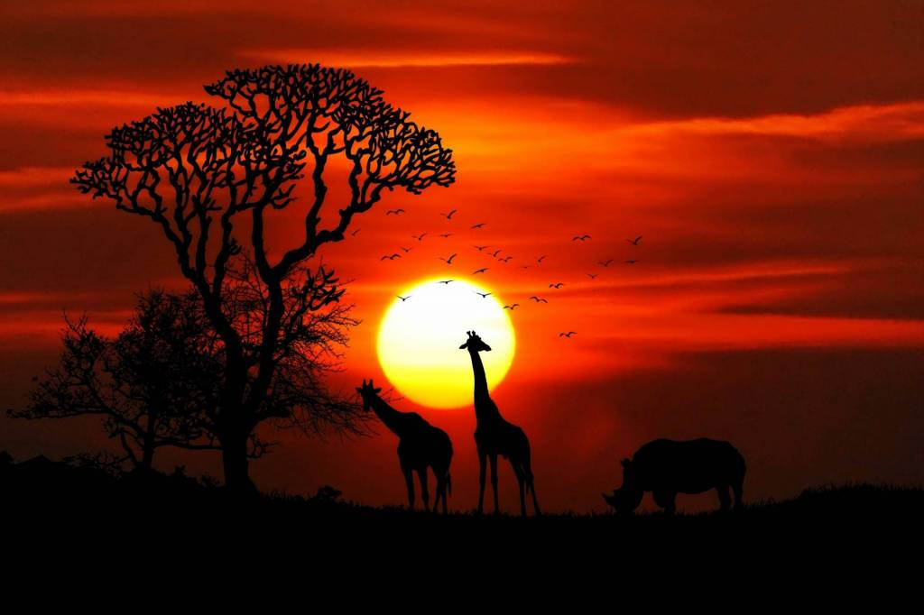 african elephant silhoutte