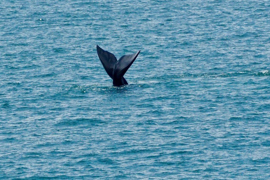 hermanus whale festival 2020