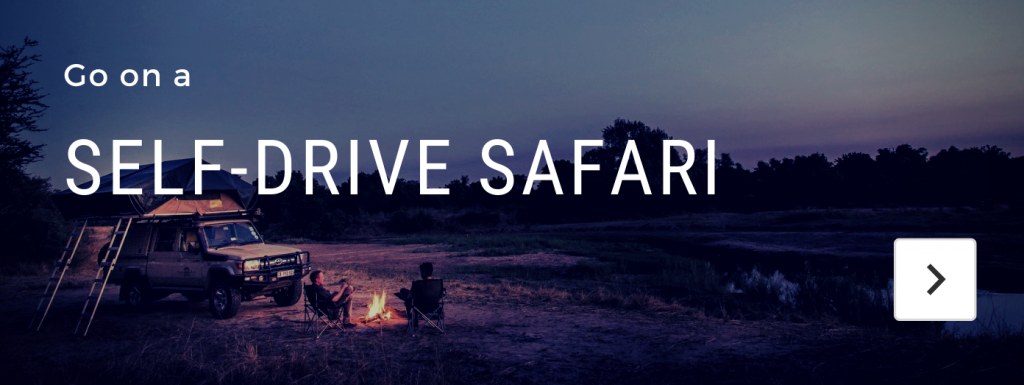 self drive safari across africa