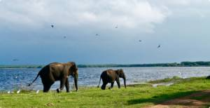 chobe national park 4x4 safari