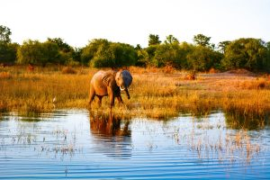 lake kariba safari in zambia safari
