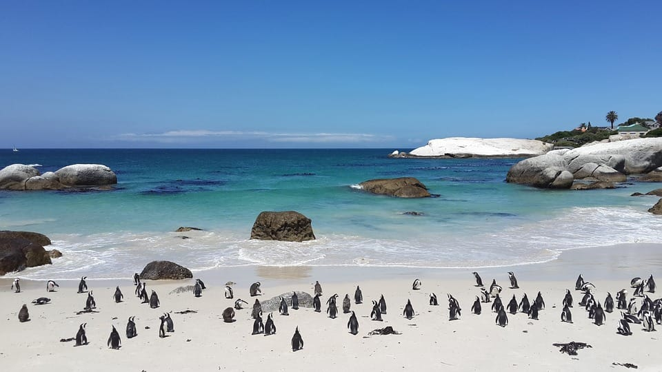 Water Penguins Sand White Tropical Boulders Beach