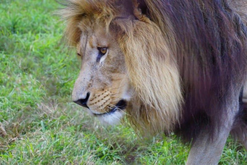 moholoholo-wildlife-rehabilitatie-centrum