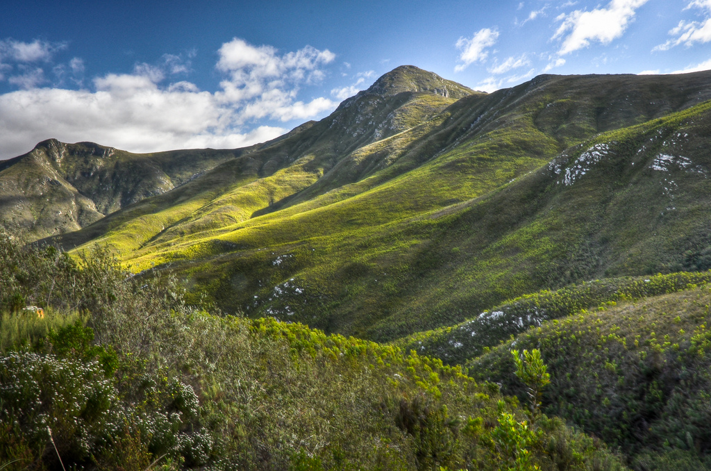 outeniqua-hiking-trail