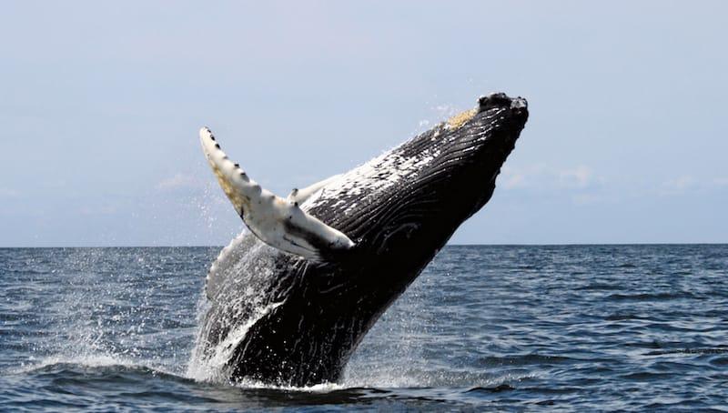 whale-watching-fish-hoek