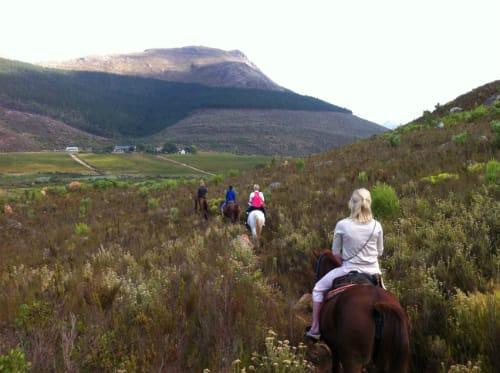 horse-riding-franschhoek