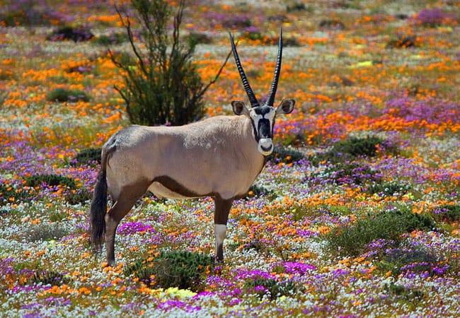 namaqualand-national-park