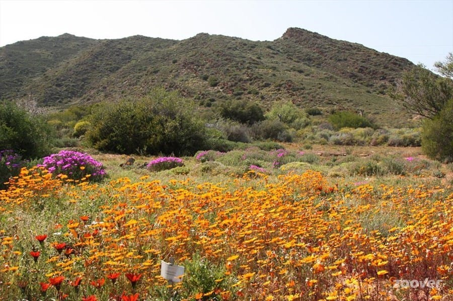 karoo-botanical-garden