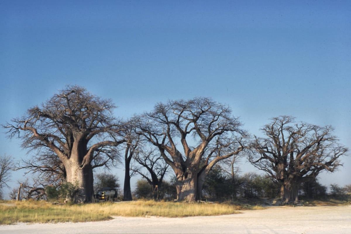 Car-rental-Botswana
