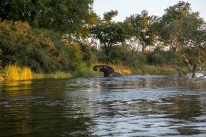 self-drive safari in livingstone zambia