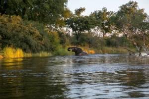 self-drive safari in livingstone zambia