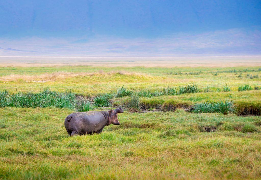 go see hippos in st lucia kzn