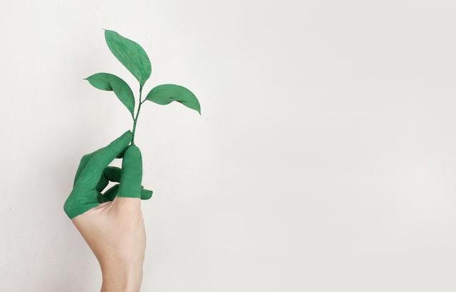 sustainability blog post