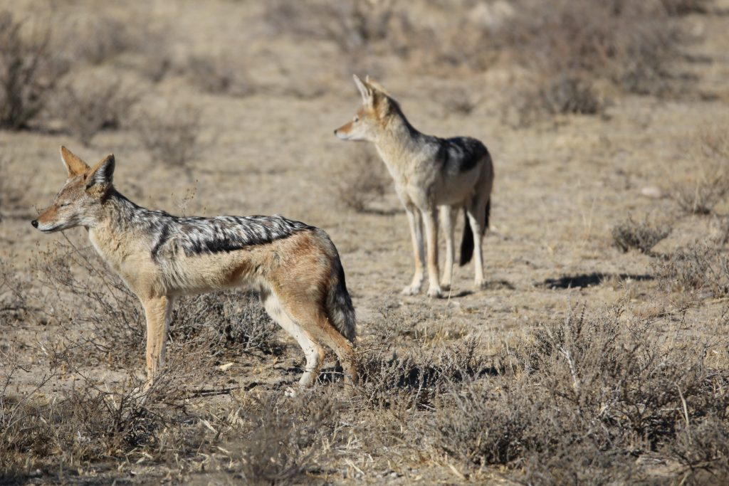 animals to see in South Africa