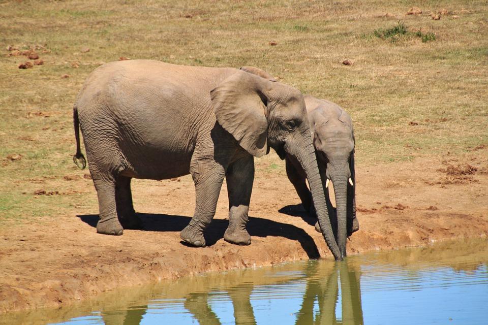 Addo Elephant National Park safari experience