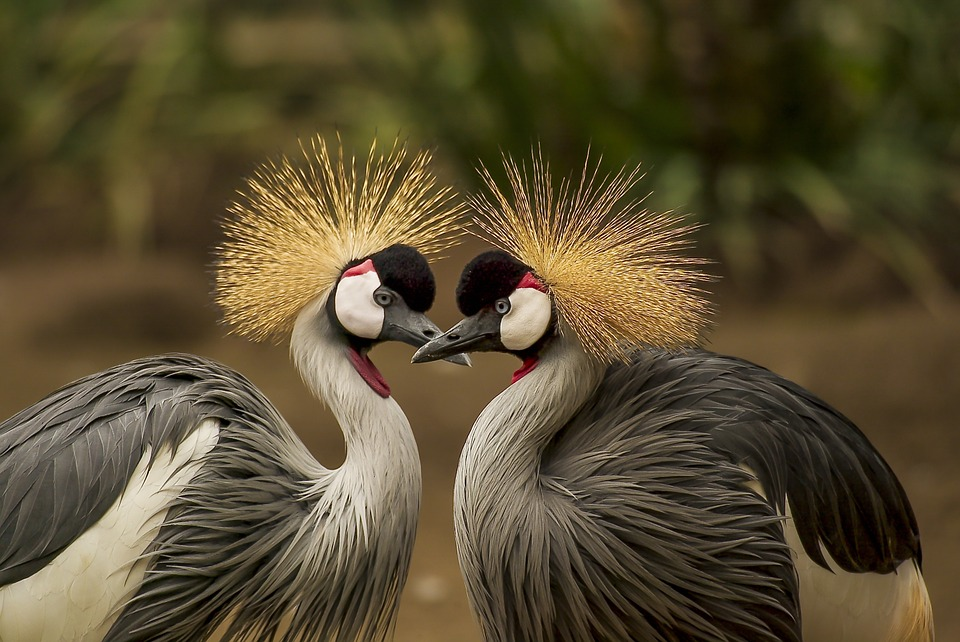 World of Birds in Plettenberg Bay