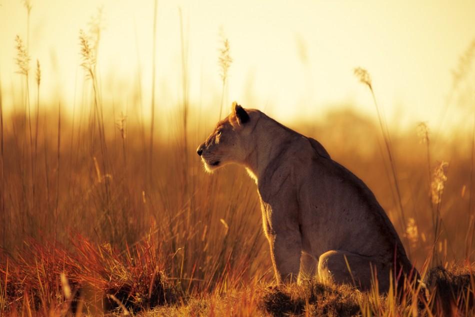The ultimate Botswana safari self-drive