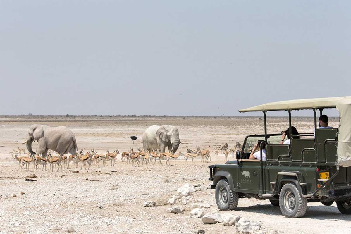hire-a-car-namibia