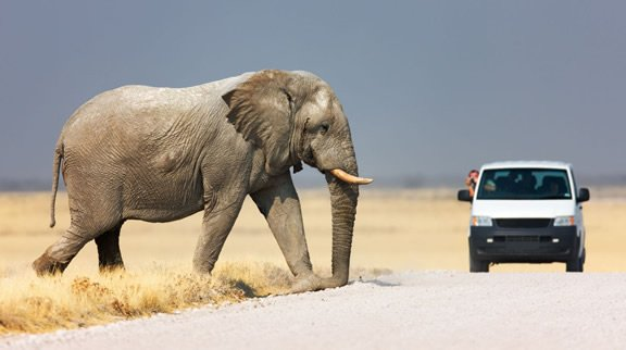 Self-drive in the Etosha National Park