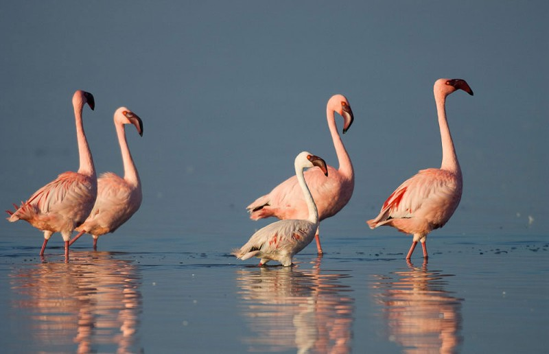 Etosha National Park hosts thousands of migrating flamingos