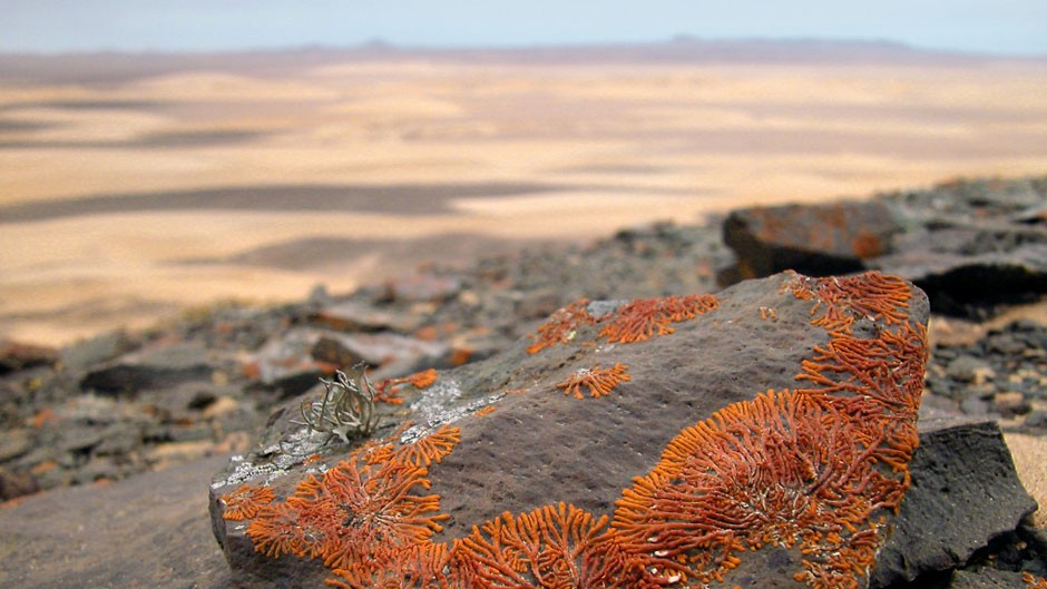 Lichen are protected throughout Namibia