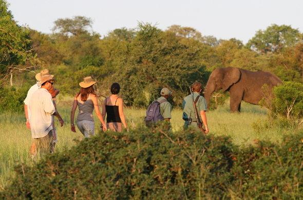 Walking safaris in the Kruger National Park
