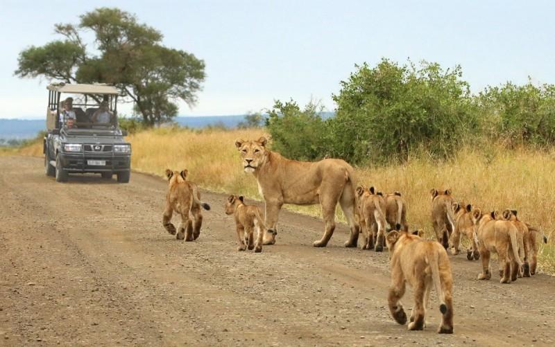 Self-drive in Etosha National Park