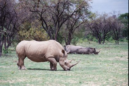 Big 5 Safari in Zimbabwe