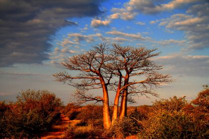 Kruger National Park in the Dry Season