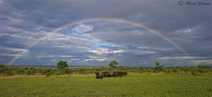 The beginning of the wet season at Kruger National Park