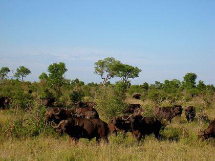 Summer time at Kruger National Park