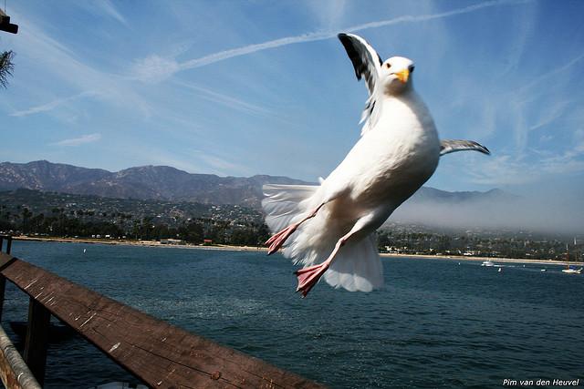 Save our seabird