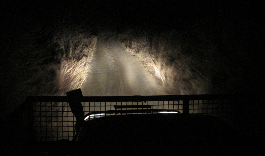 Using a spotlight to view animals after dusk on a self-drive